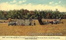 far001136 - Chili Harvesting Farming, Farm, Farmer, Postcard Postcards