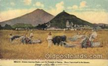 far001141 - Mexico, American Binders Farming, Farm, Farmer, Postcard Postcards