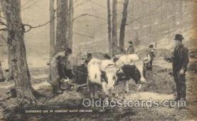 far001151 - Vermont Maple Orchard Farming, Farm, Farmer, Postcard Postcards