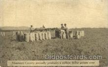 far001155 - Potato crop, Monterey Farming, Farm, Farmer, Postcard Postcards