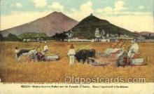 far001165 - Mexico, American Binders Farming, Farm, Farmer, Postcard Postcards
