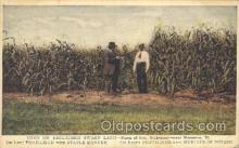 far001171 - Corn Farming, Farm, Farmer, Postcard Postcards