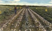 far001172 - Digging Potatoes Farming, Farm, Farmer, Postcard Postcards