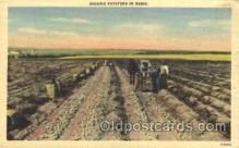 far001175 - Digging Potatoes Farming, Farm, Farmer, Postcard Postcards
