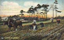 far001177 - Potato planting Farming, Farm, Farmer, Postcard Postcards