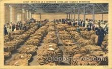far001203 - Loose-leaf Tobacco Warehouse Farming, Farm, Farmer, Postcard Postcards