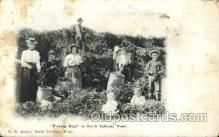 far001215 - Picking hops Farming, Farm, Farmer, Postcard Postcards