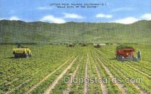 far001216 - Lettuce Field, California Farming, Farm, Farmer, Postcard Postcards
