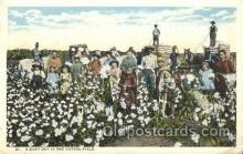 far001223 - Cotton Field Farming, Farm, Farmer, Postcard Postcards