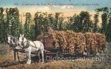 far001224 - Hop Field, Southern Pacific Farming, Farm, Farmer, Postcard Postcards