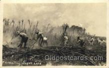 far001228 - Harvesting Sugar Cane Farming, Farm, Farmer, Postcard Postcards
