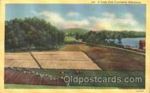 far001240 - Cranberries Farm Farming, Farm, Farmer, Postcard Postcards