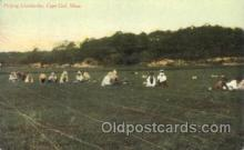 far001246 - Picking Cranberries Farming, Farm, Farmer, Postcard Postcards