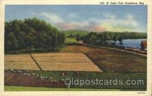 far001247 - Cranberries Farm Farming, Farm, Farmer, Postcard Postcards