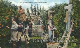 far001252 - Picking oranges Farming, Farm, Farmer, Postcard Postcards