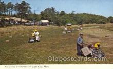 far001262 - Harvesting Cranberries Farming, Farm, Farmer, Postcard Postcards