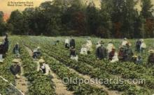far001263 - A Strawberry Field Farming, Farm, Farmer, Postcard Postcards