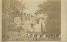 far001264 - Apple harvest Farming, Farm, Farmer, Postcard Postcards