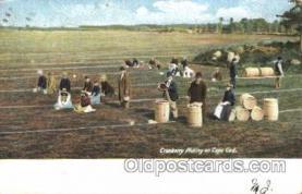 far001269 - Picking Cranberries Farming, Farm, Farmer, Postcard Postcards