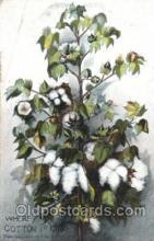 far001274 - Cotton Farming, Farm, Farmer, Postcard Postcards