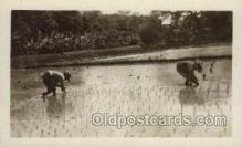 far001297 - Farming Old Vintage Antique Postcard Post Card