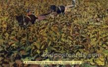 far001303 - Tobacco Field, Dixieland Farming Old Vintage Antique Postcard Post Card