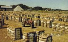 far001324 - Bales of Cotton Farming Old Vintage Antique Postcard Post Card