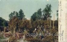 far001335 - Hop Picking Farming Old Vintage Antique Postcard Post Card