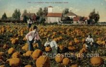 far001339 - Pumpkin Field Farming Old Vintage Antique Postcard Post Card