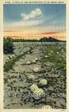 far001358 - Watermelons Farming Old Vintage Antique Postcard Post Card