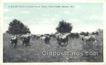 far001373 - Heard of Green County Brown Swiss Cattle Farming Postcard Post Card