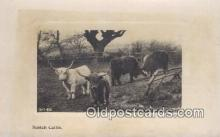 far001386 - Scotch Cattle Farming Postcard Post Card