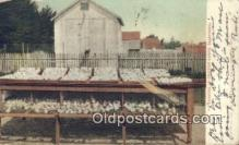 far001392 - Brooder on Chicken Ranch Farming Postcard Post Card