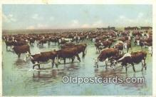 far001394 - Trial Herd Watering Farming Postcard Post Card