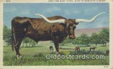 far001399 - Texas Long Horn Farming Postcard Post Card