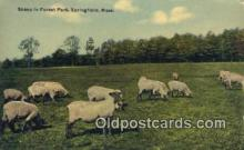 far001400 - Sheep in Forest Park Farming Postcard Post Card