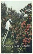 far001412 - Picking Apples Farming Postcard Post Card