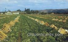 far001420 - Finest Lettuce Farming Postcard Post Card