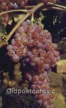 far001428 - Grapes Farming Postcard Post Card