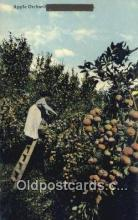 far001446 - Apple Orchard Farming Postcard Post Card