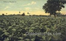 far001448 - Tobacoo Plantation Farming Postcard Post Card