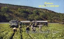 far001477 - Salinas, Valley of Green Gold Farming Postcard Post Card
