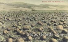 far001482 - Pumpkin Field Farming Postcard Post Card