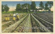 far001486 - Maine Potato Farm Farming Postcard Post Card