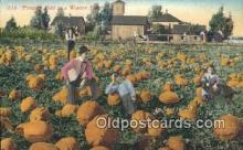 far001490 - Pumpkin Field Farming Postcard Post Card