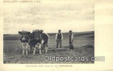 far001495 - Harrowing with Oxen Farming Postcard Post Card
