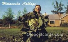 far001504 - Matanuska Cabbage Farming Postcard Post Card