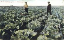 far001505 - How Cabbages grow Farming Postcard Post Card
