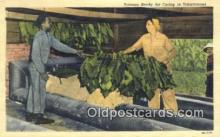 far001511 - Tobacco Ready for Curing Farming Postcard Post Card
