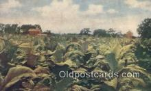 far001512 - Tobacco Farming Postcard Post Card